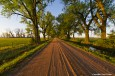 cottonwood_alley_web thumbnail